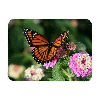 Mariposa de monarca en el Lantana Flowers.Magnet Imanes Flexibles