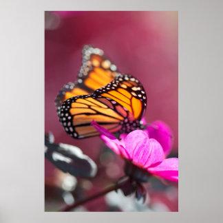 Mariposa de monarca en el poster rosado de la flor