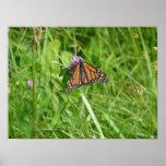 Mariposa de monarca en el trébol púrpura impresiones