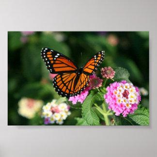 Mariposa de monarca en la flor del Lantana Póster