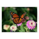 Mariposa de monarca en la flor del Lantana Tarjetas