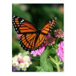 Mariposa de monarca en la flor del Lantana Tarjeta Postal