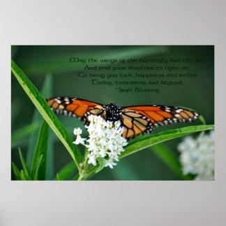 Mariposa de monarca en la flor del milkweed blanco poster