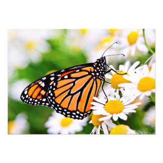 Mariposa de monarca en la flor