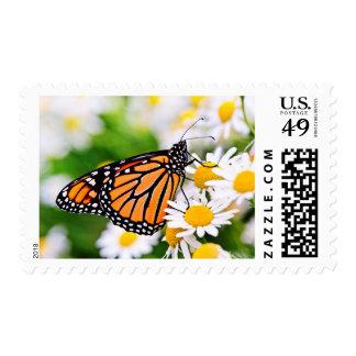 Mariposa de monarca en la flor sello