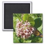Mariposa de monarca en la foto del Milkweed Imán Para Frigorífico