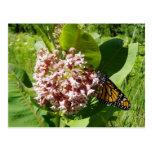 Mariposa de monarca en la foto del Milkweed Postal