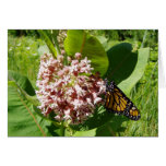 Mariposa de monarca en la foto del Milkweed Tarjetas