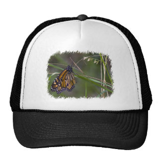 Mariposa de monarca en la hierba gorro