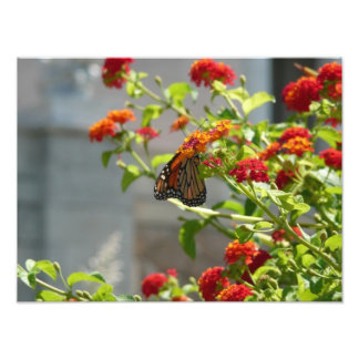 Mariposa de monarca en la naturaleza roja de Bush Cojinete