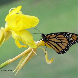 Mariposa de monarca en la parte posterior simple d llavero fotográfico