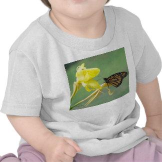 Mariposa de monarca en la parte posterior simple camisetas