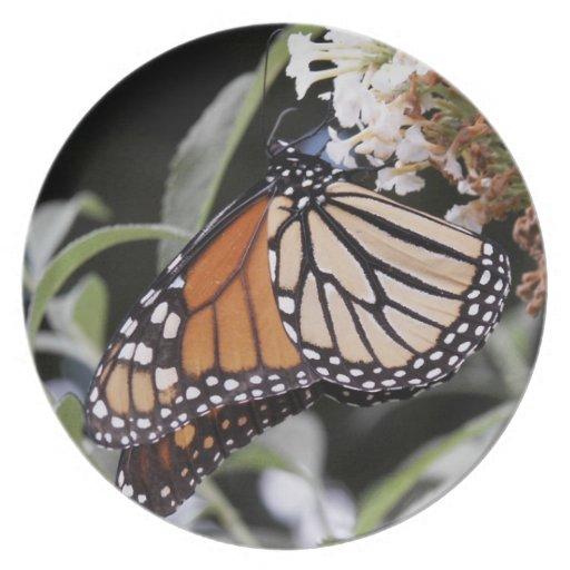 Mariposa de monarca en la placa de la melamina plato de comida