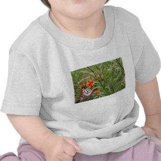 Mariposa de monarca en la planta anaranjada roja camisetas