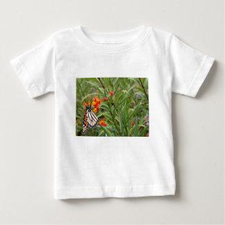 Mariposa de monarca en la planta anaranjada roja polera