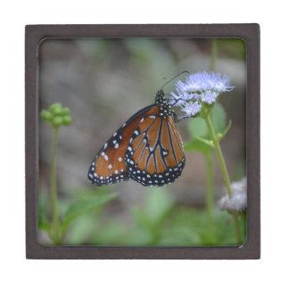 Mariposa de monarca en la serie de la mariposa de cajas de recuerdo de calidad