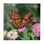 Mariposa de monarca en la teja del Lantana Flowers