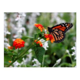 Mariposa de monarca en Lantana anaranjado y rojo Postal