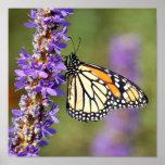 Mariposa de monarca en mala hierba de Pickerel Impresiones