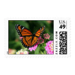 Mariposa de monarca en sello de la flor del Lantan