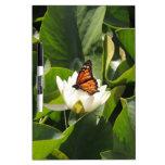 Mariposa de monarca en un cojín de lirio tablero blanco