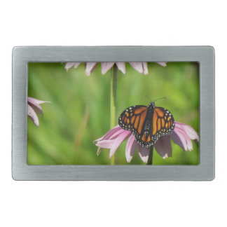 Mariposa de monarca en un coneflower púrpura hebillas cinturon rectangulares