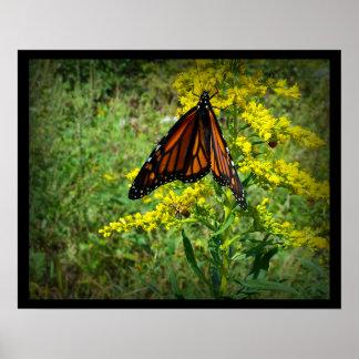 Mariposa de monarca en una flor amarilla impresiones