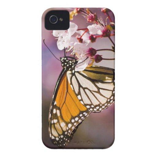 Mariposa de monarca en una flor iPhone 4 protector