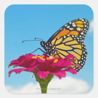Mariposa de monarca en una flor pegatina cuadrada