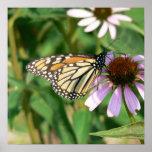 Mariposa de monarca en una flor púrpura del cono impresiones