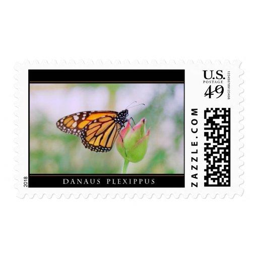 Mariposa de monarca en una flor - sello