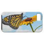 Mariposa de monarca en una Susan observada negro Funda Para iPhone 5 Tough