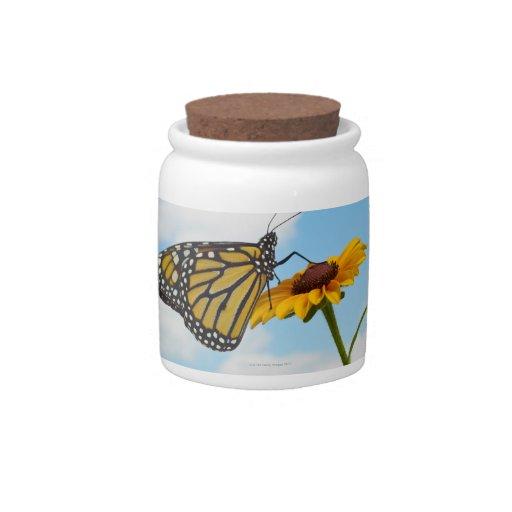 Mariposa de monarca en una Susan observada negro Jarras Para Caramelos