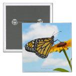 Mariposa de monarca en una Susan observada negro Pin Cuadrado
