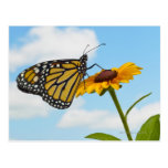 Mariposa de monarca en una Susan observada negro Postal