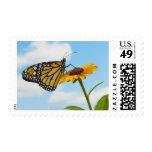 Mariposa de monarca en una Susan observada negro Franqueo