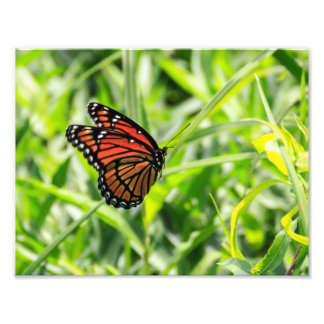 Mariposa de monarca en vuelo cojinete