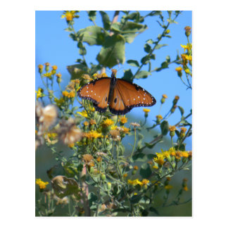 Mariposa de monarca en Wildflowers amarillos Postal