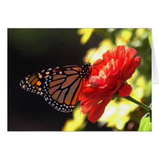 Mariposa de monarca en Zinnia rojo Tarjeta De Felicitación