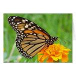 Mariposa de monarca felicitación