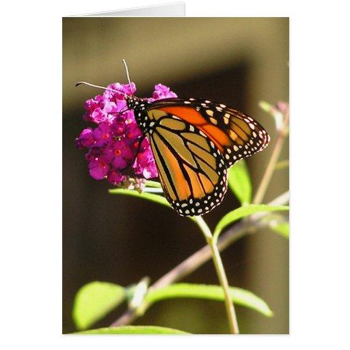Mariposa de monarca felicitacion