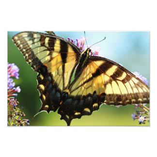 Mariposa de monarca fotografía