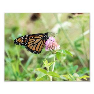 Mariposa de monarca fotografías