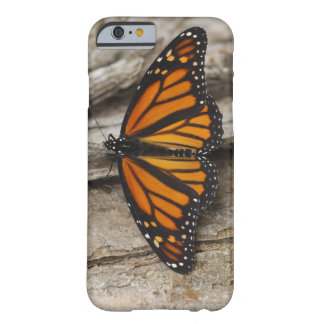 Mariposa de monarca funda de iPhone 6 barely there