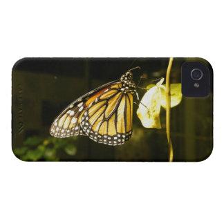 Mariposa de monarca funda para iPhone 4 de Case-Mate