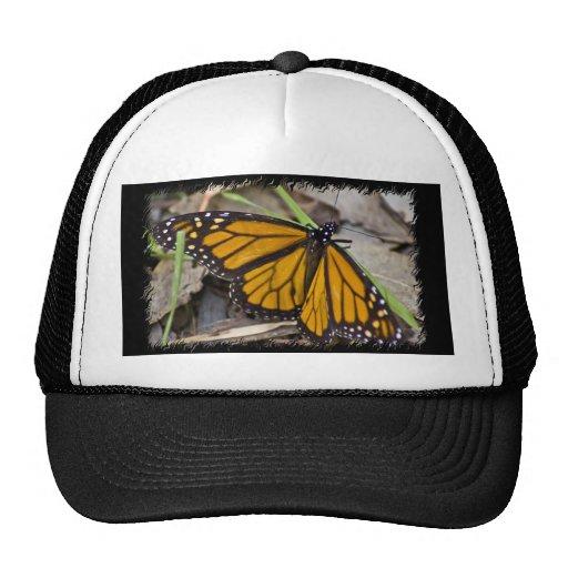 Mariposa de monarca gorro