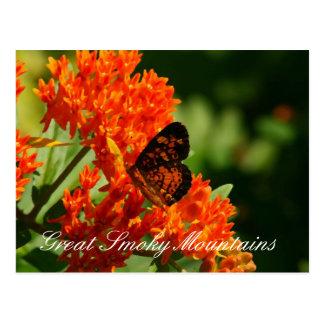 Mariposa de monarca Great Smoky Mountains Tarjetas Postales