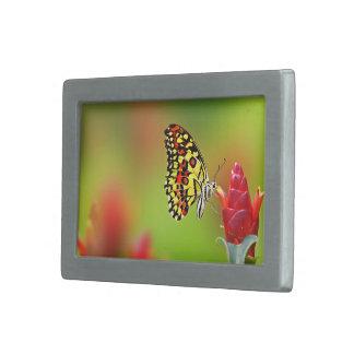 Mariposa de monarca hebillas cinturón rectangulares