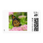 Mariposa de monarca hermosa envio