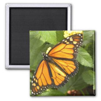 Mariposa de monarca - imán
